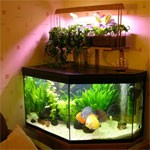 Dream Interpretation Aquarium | RM.