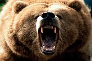 Bears dream dictionary