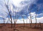 Drought dream dictionary