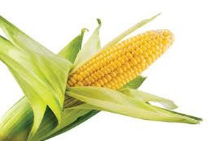 Dream Interpretation Corn | RM.