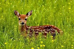 Dream Dictionary Deer Symbol | Dream Analysis Interpretation Deer