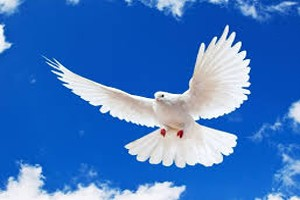 Dream Dictionary Dove Symbol | Dream Analysis Interpretation Dove