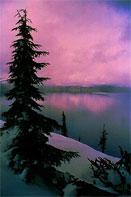 dream pine