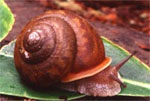 dream snail