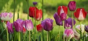 flowers dream symbols