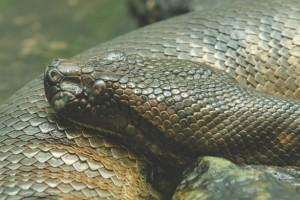 Anaconda drem interpretation