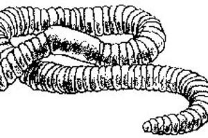 Angleworm drem interpretation