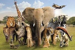 Animals dream dictionary