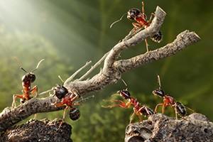 Ants drem interpretation