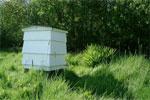 Beehive drem interpretation