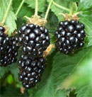 Blackberries dream dictionary