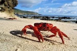 Crab dream dictionary