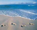 dream footprints