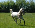 dream gallop
