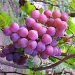 dream grapes