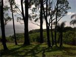 dream grove