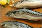 dream mackerel