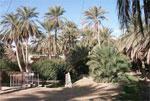 dream oasis
