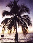 Palm tree drem interpretation