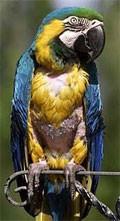 dream parrot