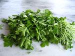 dream parsley