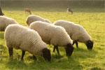dream pasture