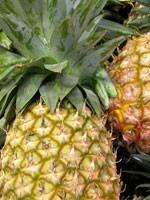 dream pineapple