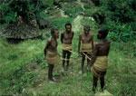 Pygmy drem interpretation