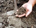 dream soil