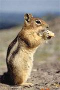 dream squirrel