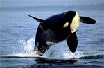 dream whale