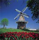 Windmill drem interpretation