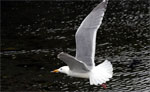 Wing(s) drem interpretation