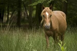 A dream about a horse drem interpretation