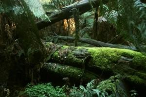 A dream about a jungle drem interpretation