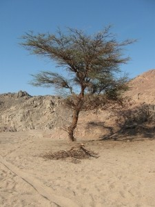 A dream about a tree drem interpretation