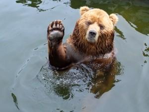A dream about a bear drem interpretation
