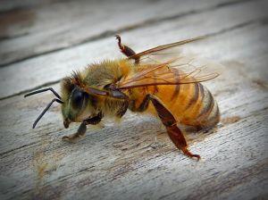 A dream about a bee drem interpretation