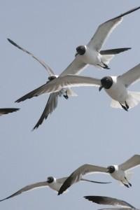 A dream about a bird drem interpretation