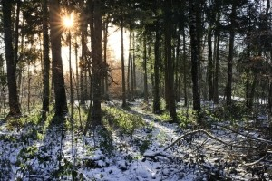 A dream about a forest drem interpretation