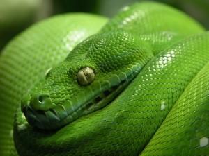A dream about a snake drem interpretation